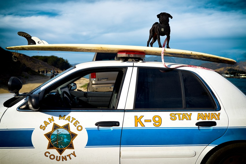 K-9. Stay Away. by Peter Adams.